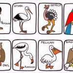 animales3 150x150 - ¿Qué enseñar en Ingles a Niños de Primaria? 10 Temas Básicos