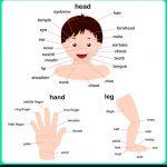 cuerpo 150x150 - ¿Qué enseñar en Ingles a Niños de Primaria? 10 Temas Básicos