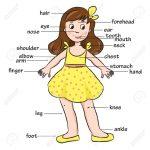 cuerpo1 150x150 - ¿Qué enseñar en Ingles a Niños de Primaria? 10 Temas Básicos