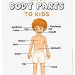 cuerpo10 150x150 - ¿Qué enseñar en Ingles a Niños de Primaria? 10 Temas Básicos