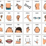 cuerpo12 150x150 - ¿Qué enseñar en Ingles a Niños de Primaria? 10 Temas Básicos