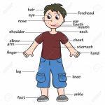 cuerpo4 150x150 - ¿Qué enseñar en Ingles a Niños de Primaria? 10 Temas Básicos
