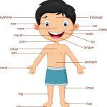 cuerpo5 150x150 - ¿Qué enseñar en Ingles a Niños de Primaria? 10 Temas Básicos