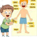 cuerpo6 150x150 - ¿Qué enseñar en Ingles a Niños de Primaria? 10 Temas Básicos
