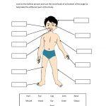 cuerpo9 150x150 - ¿Qué enseñar en Ingles a Niños de Primaria? 10 Temas Básicos
